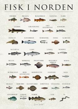 FISK I NORDEN Plakat